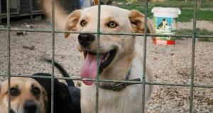 Tretí ročník Benefičného festivalu pre psí útulok v Skalici