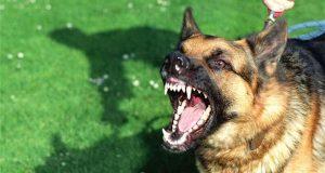 V Kátove napadol pes ženu!
