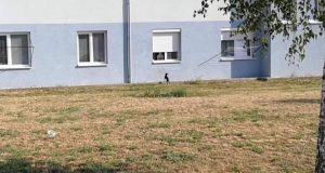 FOTO: Arogantné venčenia psíka v Skalici