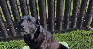 Celosvetová rarita: Sučka Hany z Unína vrhla zelené šteniatko