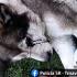 Susedovi v meste Šaštín – Stráže ubil psa, až prišiel o oko
